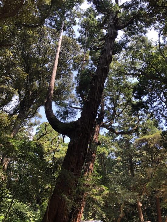 奥参道の木